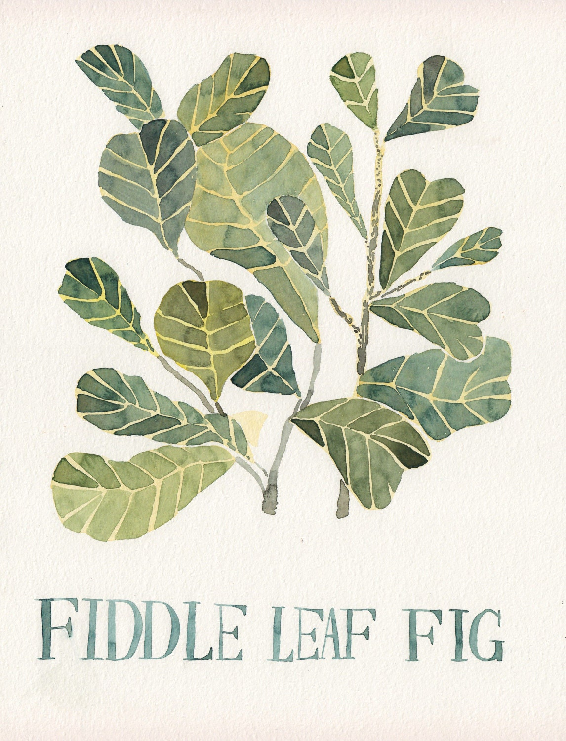 Fiddle Leaf Fig Original Watercolor Painting