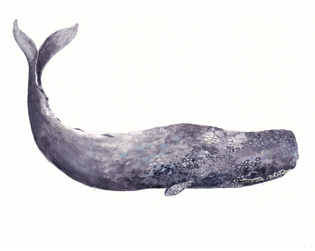 Printable sperm whale pictures