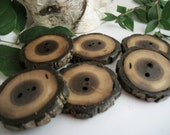 Wooden Buttons -  6 Rustic Black Walnut Tree Branch Buttons - 2 inch (50 mm)  2 holes...For Kntting Crochet and Sewing Projects