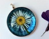 Blue Daisy Pendant Aqua backed Glass Real Pressed Flower - UK Seller