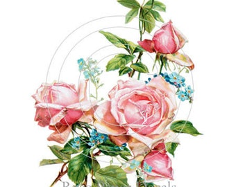 Shabby Vintage Chic Charm Pink Cottage Roses 6 Decals - De-Ro-87