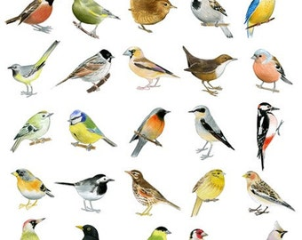 30 Drawings of Birds - Limited edition archival print