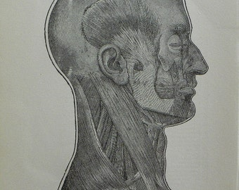 Vintage 1919 Black and White Print Set of the Head and Neck Second Layer Muscular