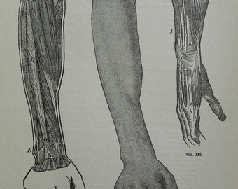 Vintage 1919 Black and White Print set of the Human Forearm and Hand