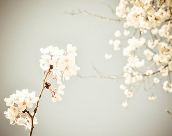 Shabby Chic, Flower Photography, Cherry Blossoms, fpoe, Spring, Vintage Inspired, Romantic, White, Wall Decor, Happy - Vintage Floral