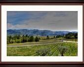 Napa Valley  - Fine Art Print