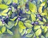 Montana Huckleberries watercolor print
