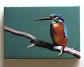 Bird on a branch / Kingfisher / Tiny canvas print