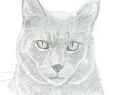 Custom Pet Pencil Portrait - 8 x 10