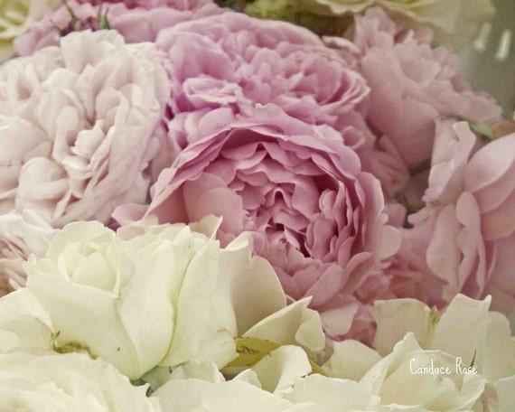 Romantic White & Pink English Roses - 8 x 10 Fine Art Photography Print