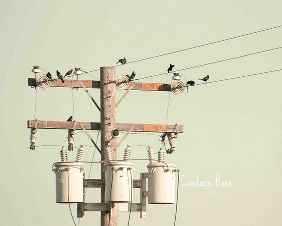 Black Birds on the High Voltage Power Lines - Fine Art 8 x 10 Photography Print
