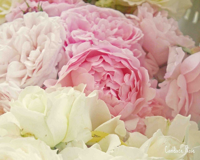 Bridal Bouquets With Cabbage Roses : White pink cabbage rose bouquet fine art by dolcechic
