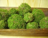 Set of 12 Moss balls or pomander assorted sizes, natural organic woodland addition to your home.