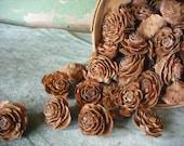 50 Cedar Roses, all natural cone from the cedar tree.