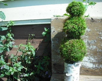 Moss and birch bark pomander topiary for the rustic, woodland nature home.