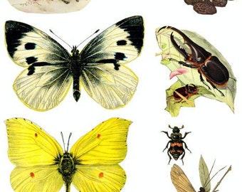 butterfly caterpillar beetles bugs insects vintage clip art collage sheet digital download image graphics printable