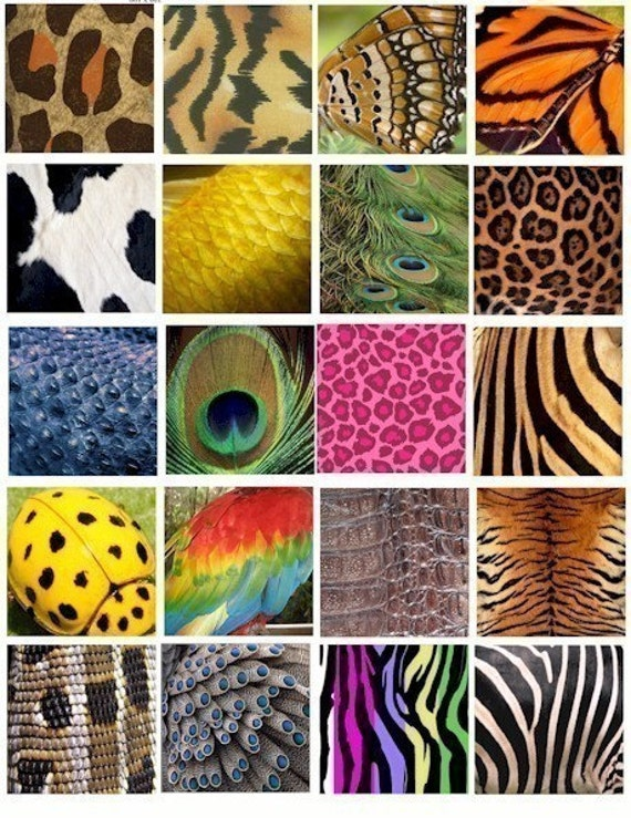 Animal and Insect skin patterns clip art collage sheet 2 INCH squares ...