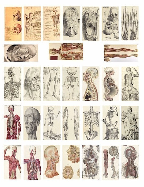 Human Anatomy Vintage Vintage Science Human Body