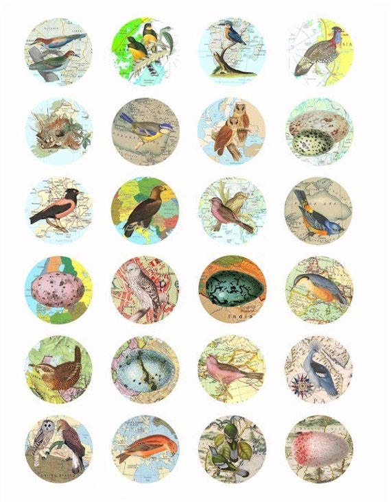 birds maps eggs clip art digital download collage sheet 1.5 INCH circles image graphics animal printables
