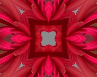 Red Daisy  Kaleidoscope