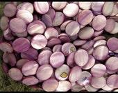 AMETHYST Oval SHELL Beads - GM225