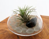 Air Plant in the White Spinning Terrarium -- Discounted
