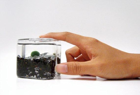 Baby Marimo Inside Its Habitat