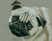 Colored Pencil Portrait of a Chinese Pug Dog