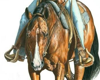 Portrait of a Western Pleasure Horse in Colored Pencil - B Bruckner