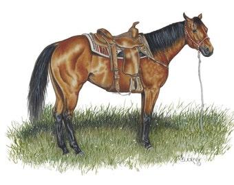 Bay Quarter Horse Mare Portrait by B.Bruckner