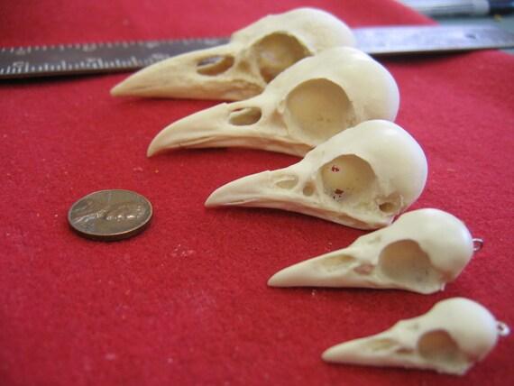 Ginger Snaps Raven Skulls Five Assorted Sizes