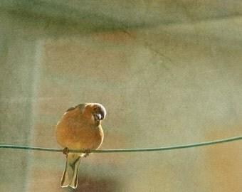 "Bird photograph. ""At the window, a bird..."" Fine art photography print. 8x8 (20x 20cm)"