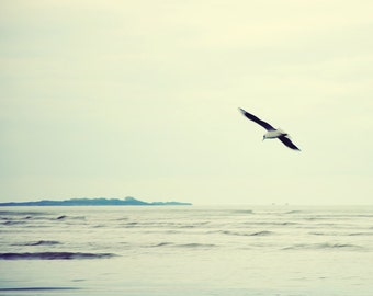 Bird photograph. Fine art photography print. 8x8 (20x 20cm)