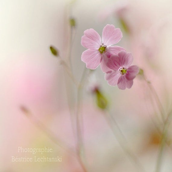 Pink flowers. Pastel. Fine art photography print. 8x8 inches (20x20 cm)