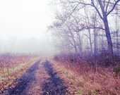 Follow Your Dreams, fine art nature photo, mist, fog, purple, path, trees, nature