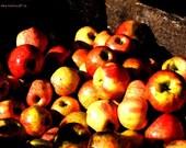 Painted Apple Bushel
