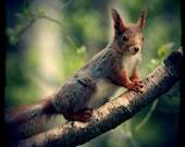 SALE Squirrel - 8x8 - Regular price 20.00 USD