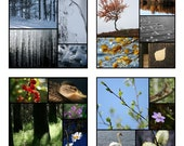 The Four Seasons - 6x6 signed Fine art prints (set of 4)
