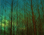Bog Trees at sunset, photo art print