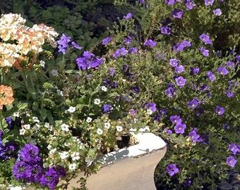 Fine Art Photography-Garden Flowers