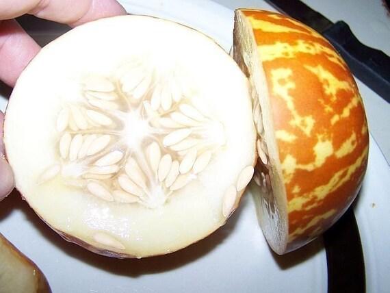 Rare Heirloom Seeds Tigger Melon