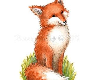 Captain, the Fox - Art Print