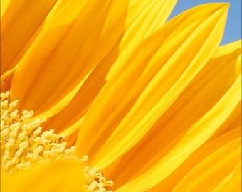 Sunflower 2 Archival print