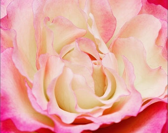 Archival Pink Flower Print - 1