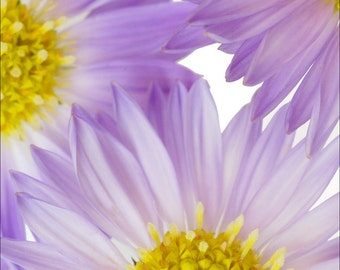 Gorgeous Purple Flower Photograph - Archival Print