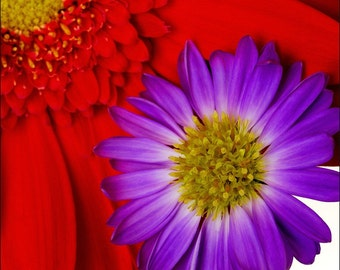 Red and Purple Flower Print 0067 - Archival