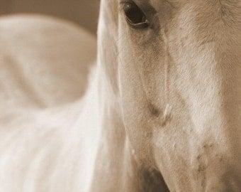 Giclee' Original Horse Photograph 8 X 10
