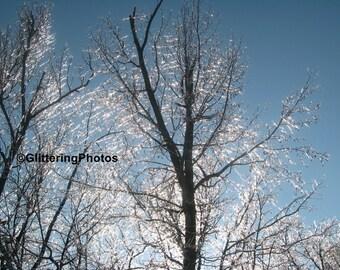 Glittering, Ice, Wathen Park, Jeffersonville, Indiana, No 3, Fine Art, Photograph, Print, 8 x 10, Glossy