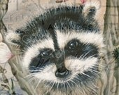 Baby RACOON cute animal original art large card