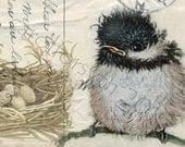 Chickadee BIRD NEST antique post card original art